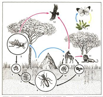 Животные в природе доклад 2553